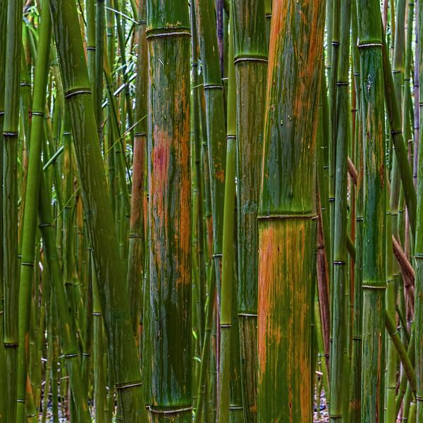 Bamboo Alu-Mini