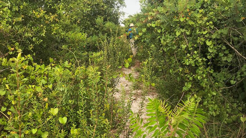 John pushing through dense undergrowth on overgrown trail
