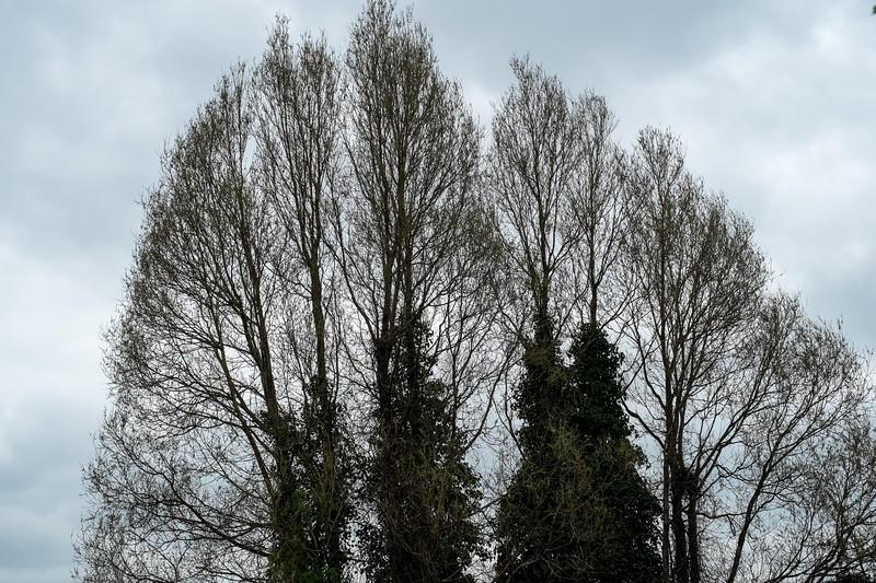 Trees, Hackney, London, United Kingdom