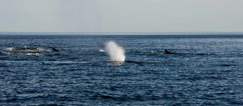 2011 quebec whale watching (27 of 80).jpg