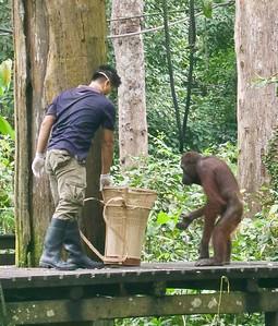Nan's Borneo Photos