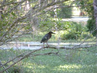 Audubon Swamp South Carolina