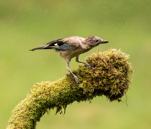 Woodpeckers and Jays