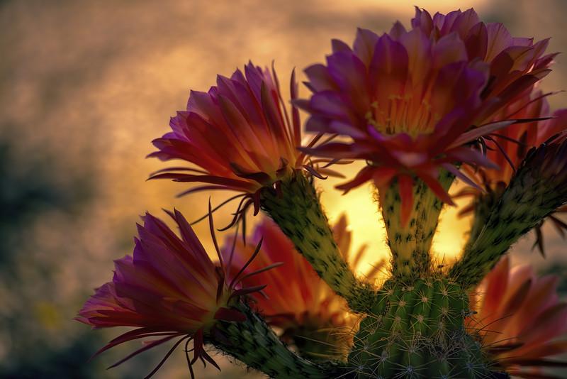 Photo #90 of 365 - Natural Beauty!