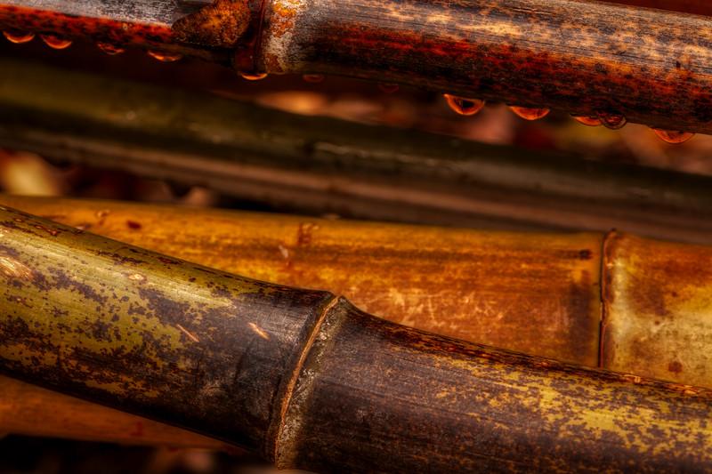 Bamboo 7, Hakone Garden, Saratoga, California, 2010