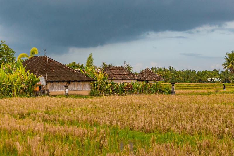 Bali (259).jpg