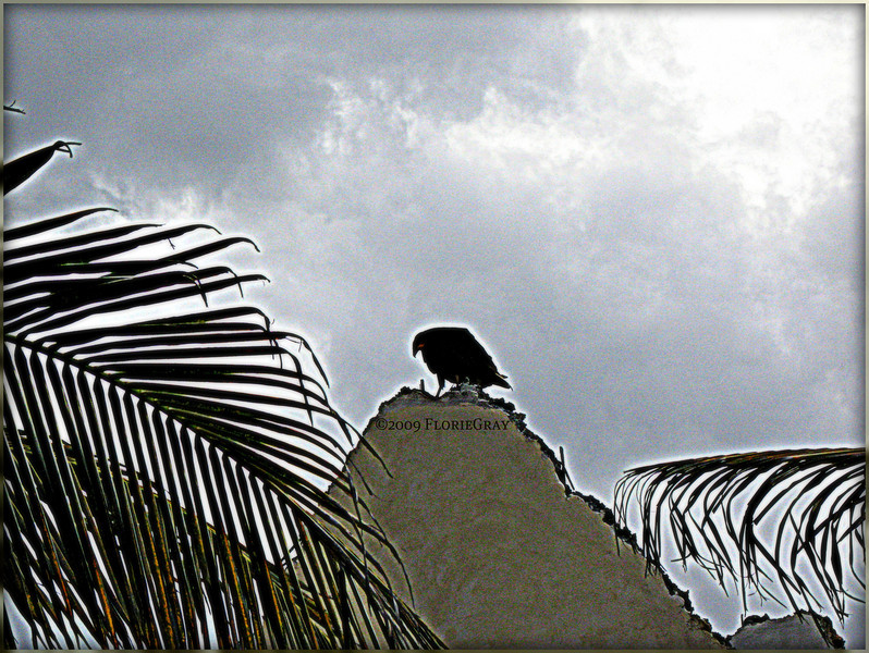 The Hunchback of Quintana Roo 