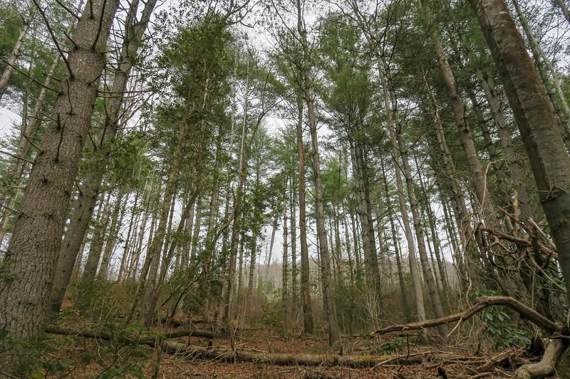 Bear Branch Trail -- 2,520'