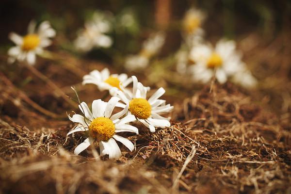 Flowers/Gardens/Nature