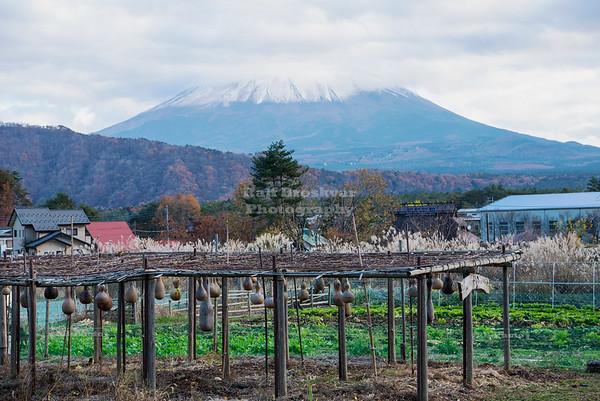 Japan - Mount Fuji - Saiko Iyashi no Sato Nemba