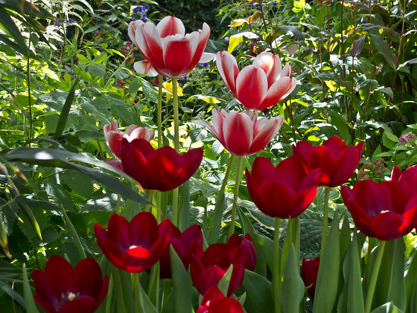 Spring Forward - Sampler of Spring Bulb Blooms