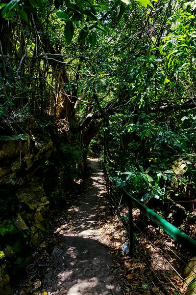Path Down the Esplanade Cliffs to Lameroo Beach