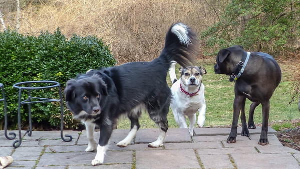 2019-01-07 Scout, Oreo, Alfie, and Morgan
