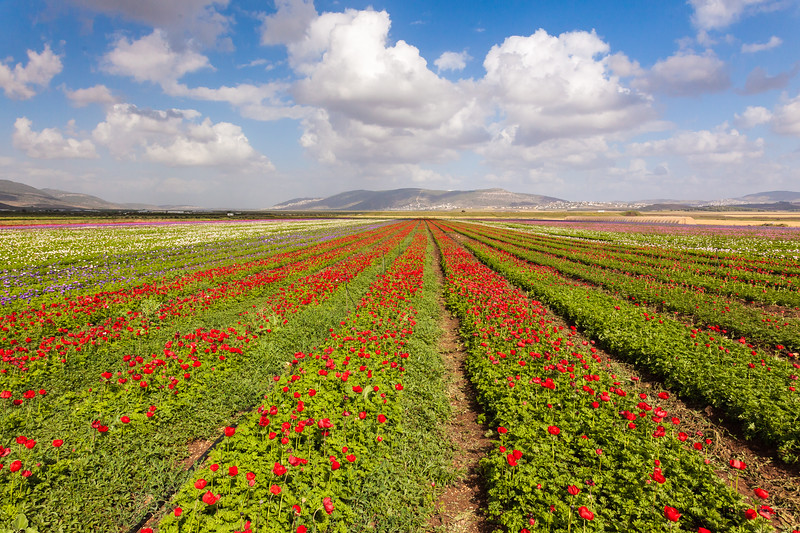 Landscape of the flowers field