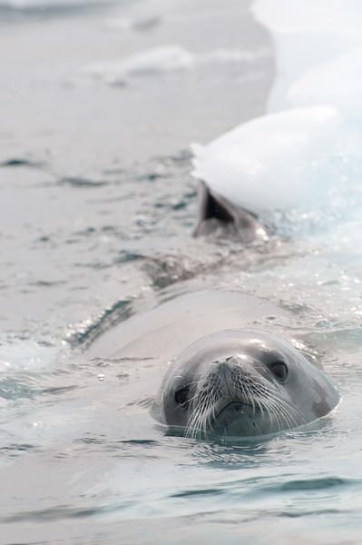 Antarctica 2015 (72 of 99).jpg