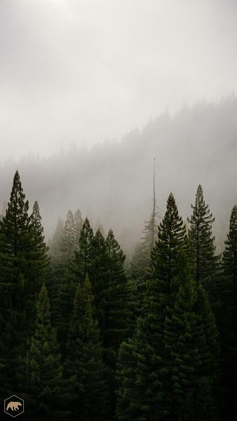 Treeline-2.jpg
