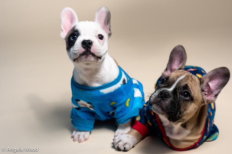 Puppies45.jpg