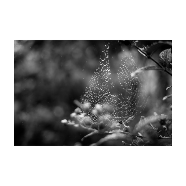 234_Spiderweb_10x10.jpg