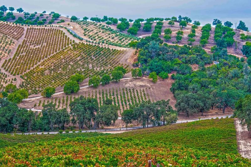 Paso Vineyards-6.jpg
