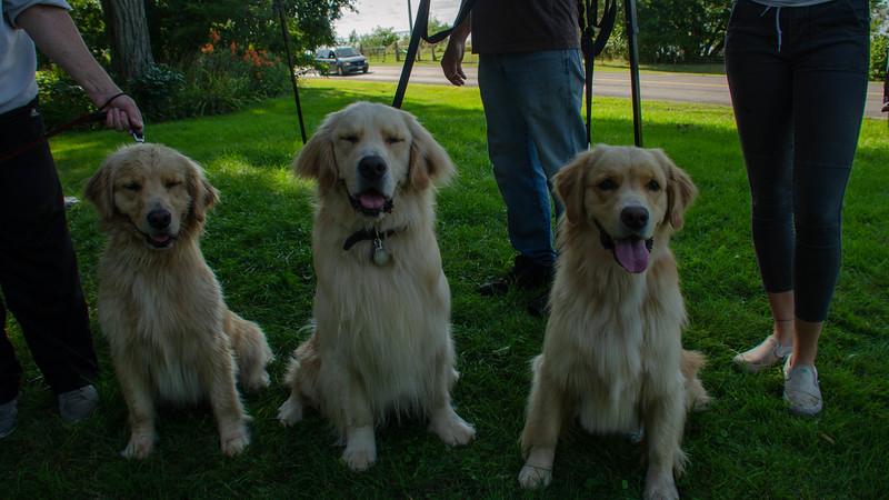 PuppyParty18-583.jpg