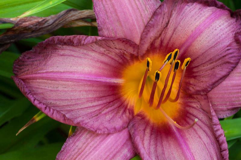 Botanicgarden11 257.jpg