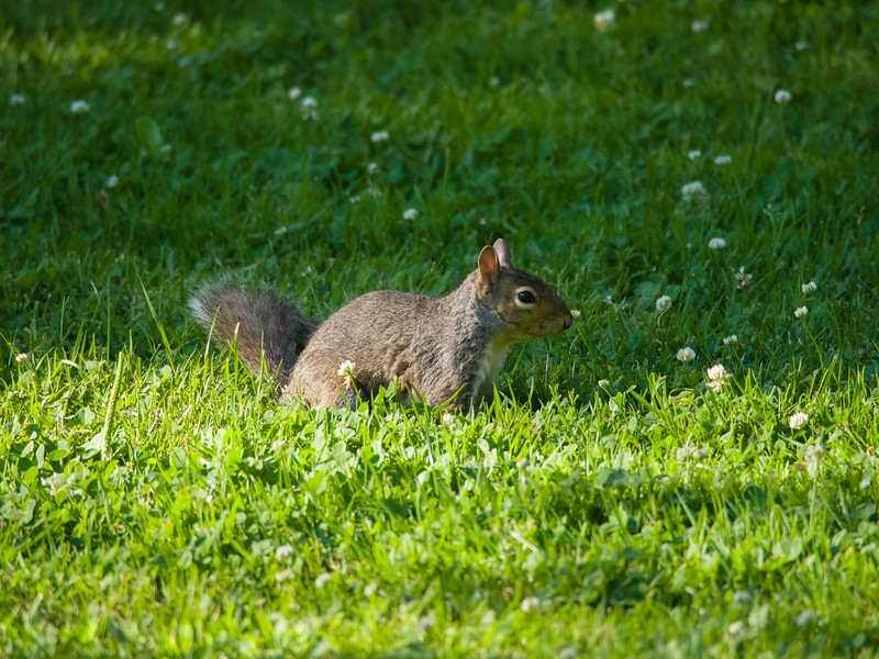Sunbeam Squirrel