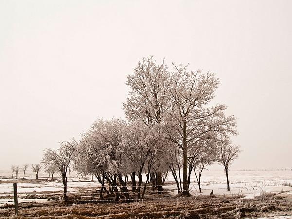 Frosty  Alberta