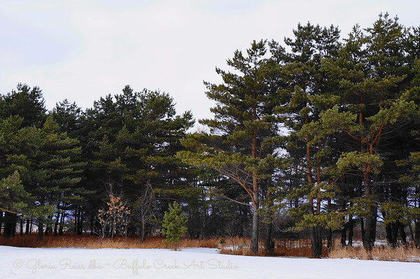 the park in winter
