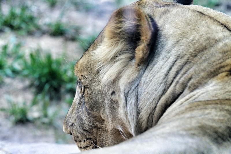Cheyenne Mtn Zoo (166).jpg