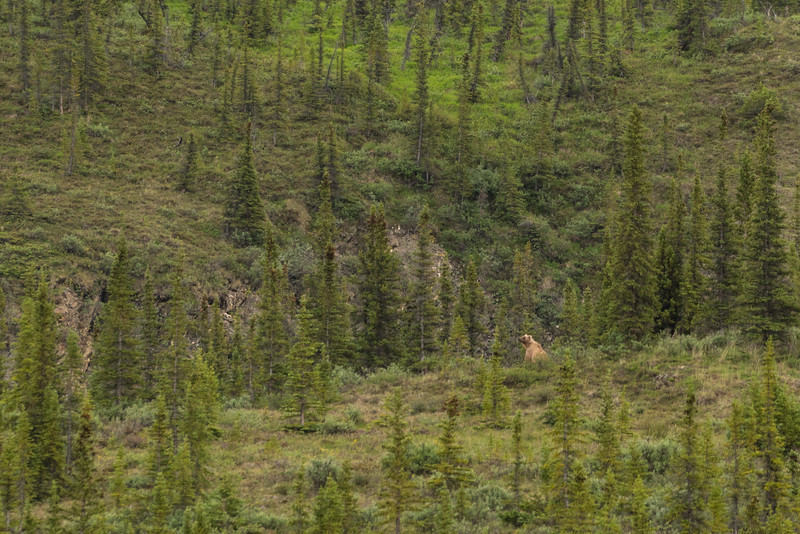 Yukon-Canada-1.jpg
