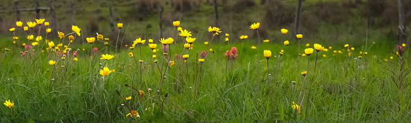 wildflowers032820.jpg