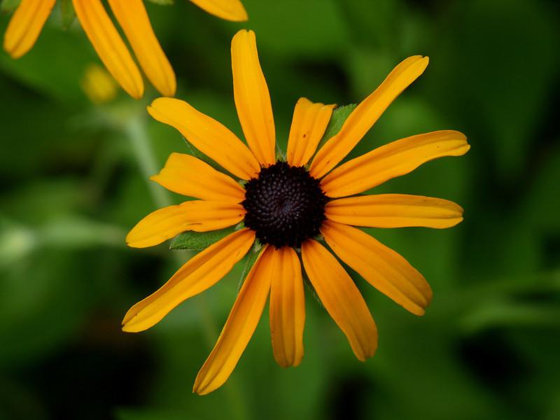 flower sayen.jpg