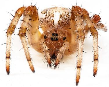 Alberta Bugs