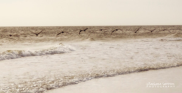 """""""All in Formation"""" - Pelicans over Oak Island - Catalog #2010"""