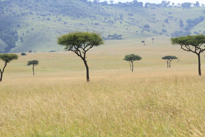 Kenya Part2 '15 884.JPG