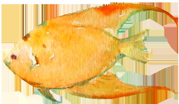 fish9.png