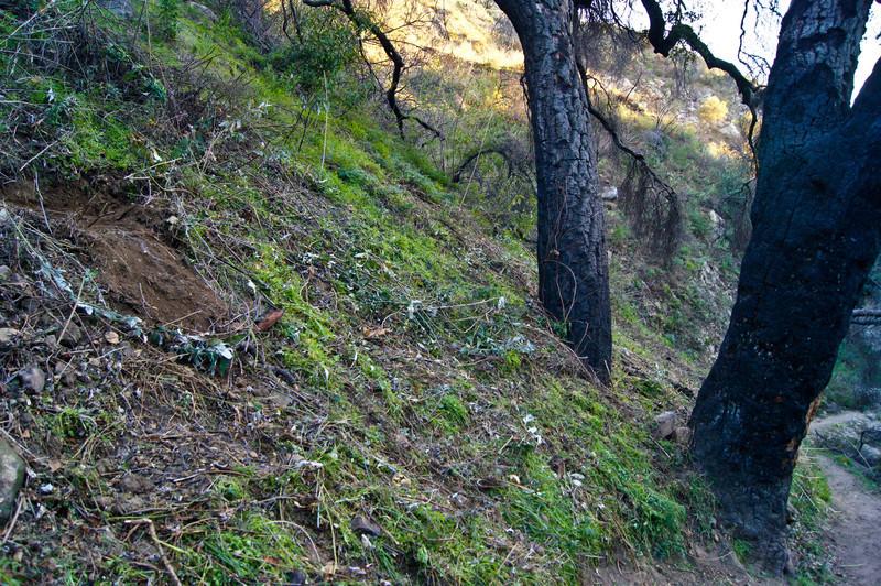 20120113012-El Prieto Trailwork Prep.jpg