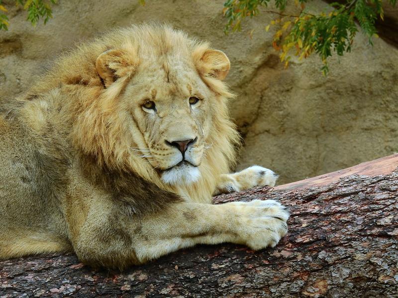 Denver Zoo 2018 (3229).JPG