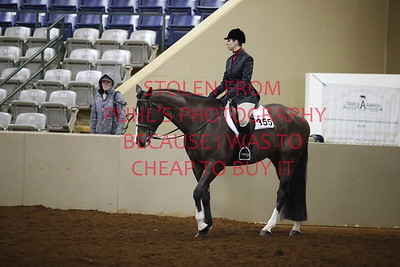 sun 109. APHA - Am Walk Trot Hunt Seat Eq