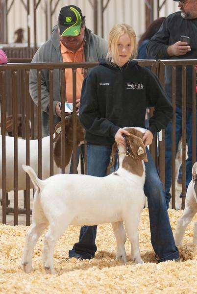 kay_county_showdown_goats_20191207-58.jpg