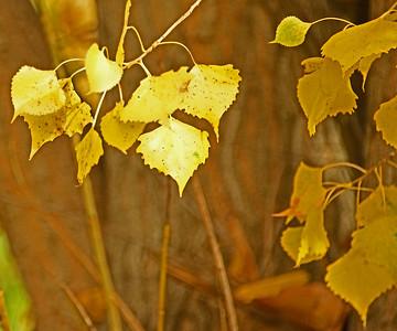 Leaves around Bennington Lake, 10-23-15