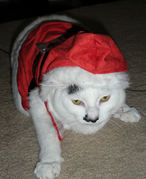 Mrs. Claws doesn't like her hat.