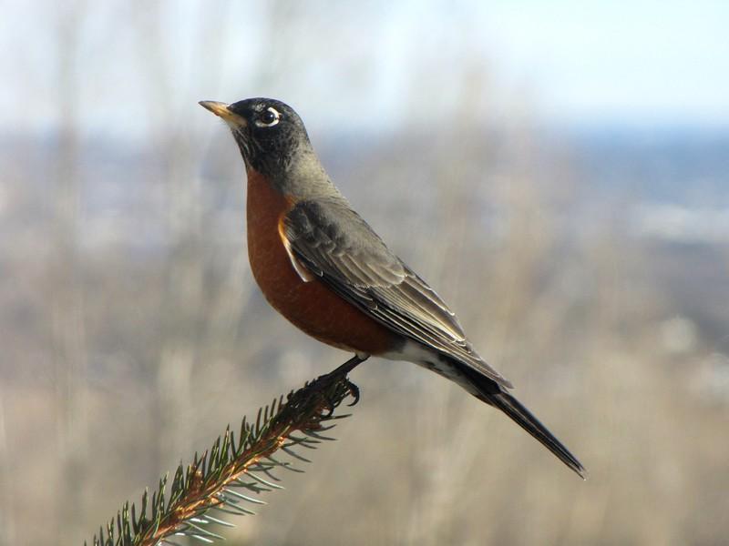 birds (173).jpg