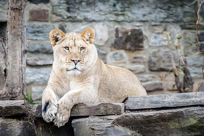 Philadelphia Zoo - 2015