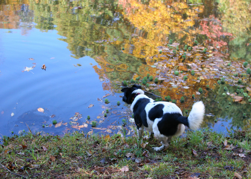 Bessie at the Piney Mountain Pond - Bessie is one of the family