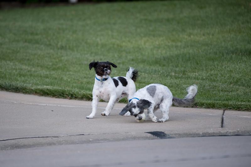 LuLu - Brady - Cooper Play Friends (37 of 109).jpg