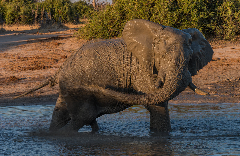Botswana_June_2017 (4051 of 6179).jpg