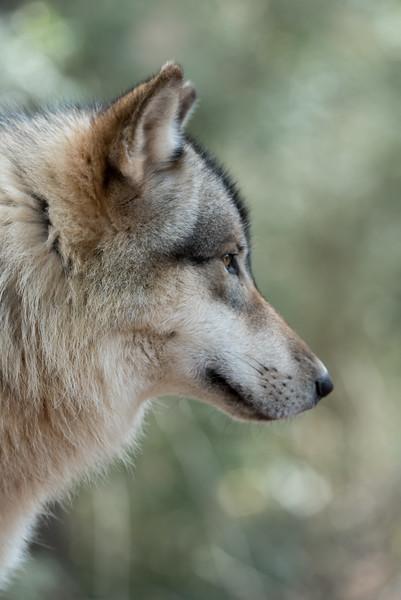 Seacrest Wolves_-31.jpg