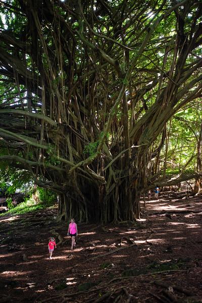 Hawaii2019-247.jpg