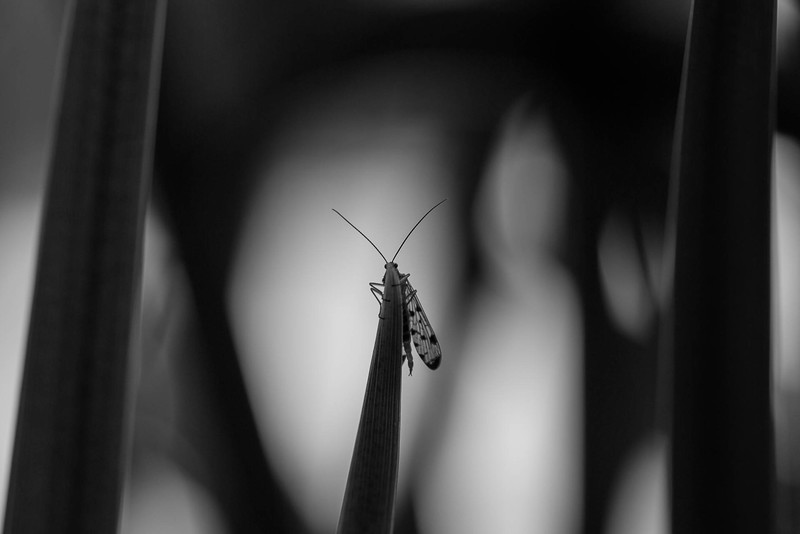 insect-0007.jpg